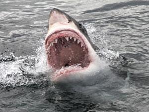 Jaws-anniversary-shark-pa